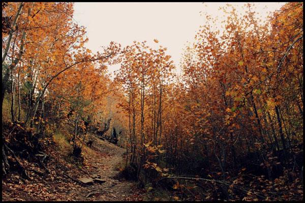 درباره روستا قلات شیراز