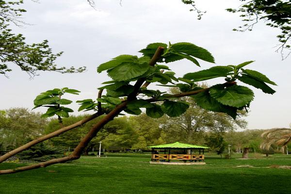 موقعیت پارک لاله تهران