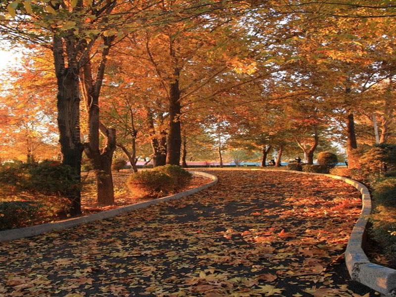 پارک ملت محلی برای ارامش در پایتخت