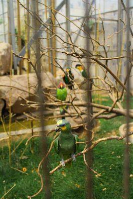 درباره باغ پرندگان تهران بیشتر بدانید