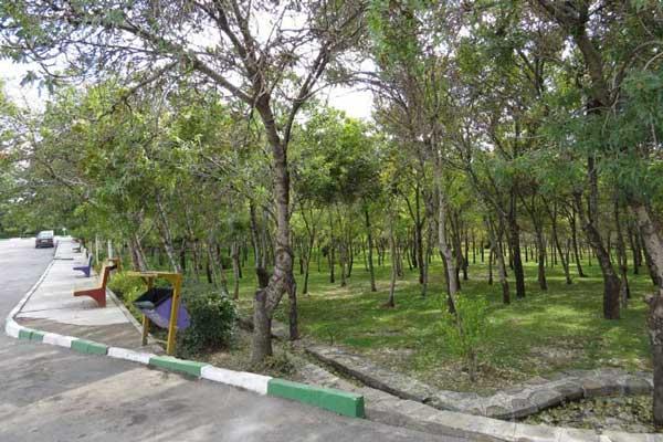 درباره پارک جنگلی شیخ تپه چه می دانید ؟