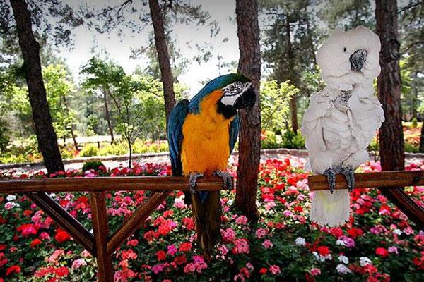 هتل های نزدیک به باغ پرندگان تهران