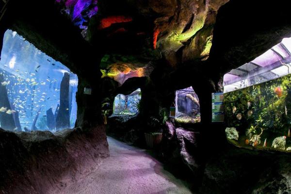 آشنایی با بخش های غار آکواریوم گنجنامه