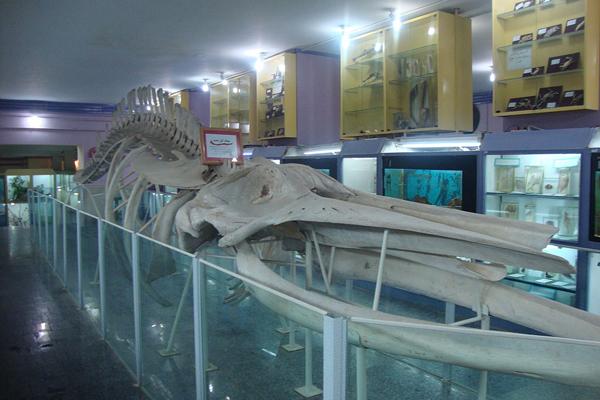 بخش های مختلف موزه تاریخ طبیعی همدان