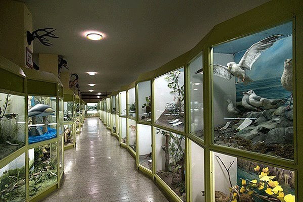درباره موزه تاریخ طبیعی همدان