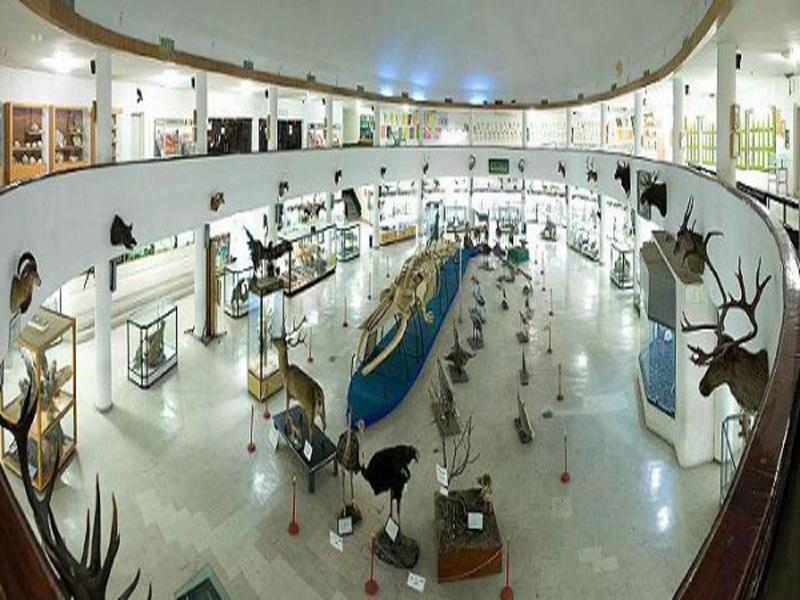 موزه-تاریخ-طبیعی تبریز