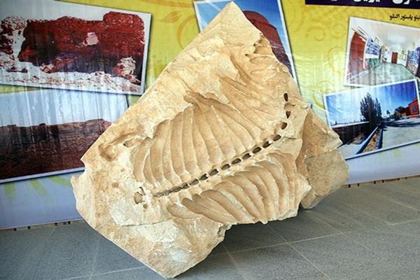 معرفی موزه ی فسیل های دریایی