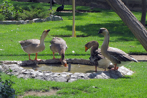 موقعیت-مکانی-باغ-پرندگان اصفهان