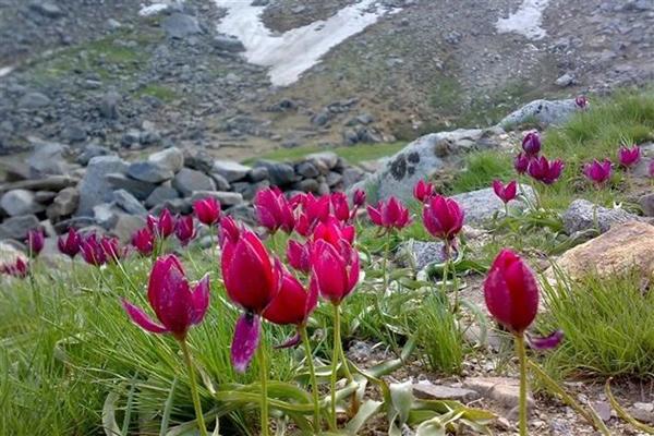 پوشش گیاهی جانوری کوهستان الوند در همدان