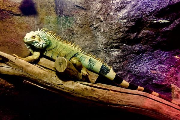 آشنایی با گونه های جانوری غار آکواریوم