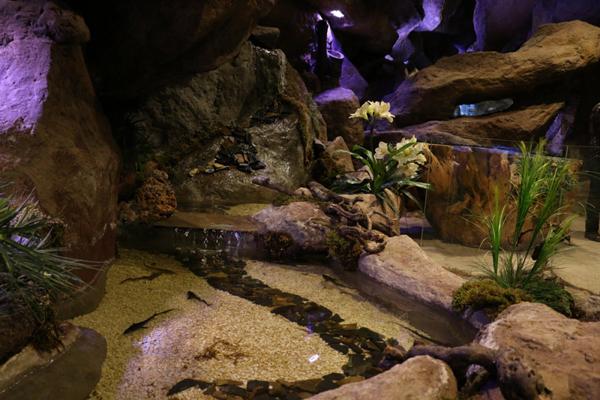 آشنایی با گونه های گیاهی غار آکواریوم
