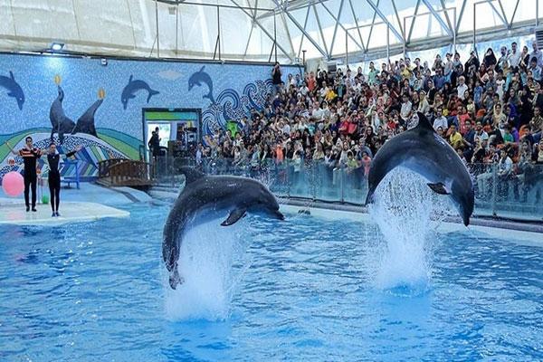 درباره پارک دلفین ها در جزیره زیبای کیش