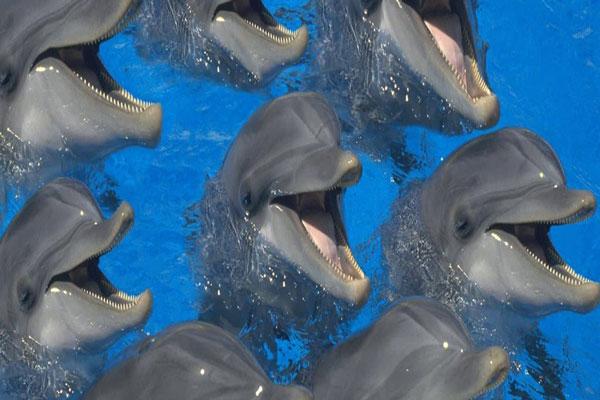 درباره پارک دلفین ها در کیش