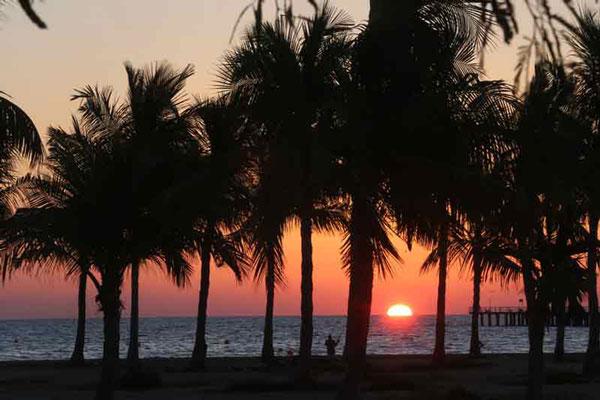 معرفی ساحل درختان نارگیل