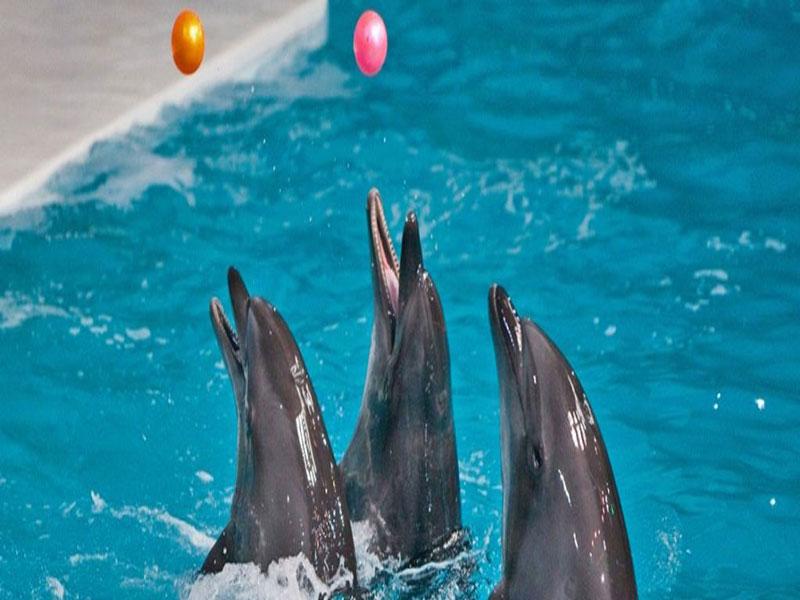 پارک دلفین ها ؛ ملاقاتی شیرین با دلفین ها