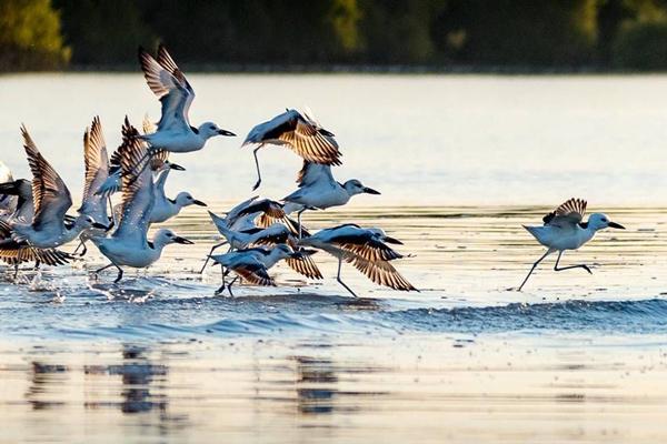 تماشای-پرندگان-در-جنگل-های-مانگرو قشم