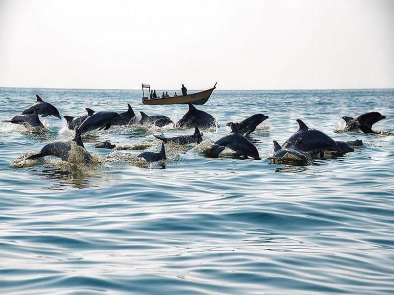 جزیره هنگام، همراه با دلفین ها
