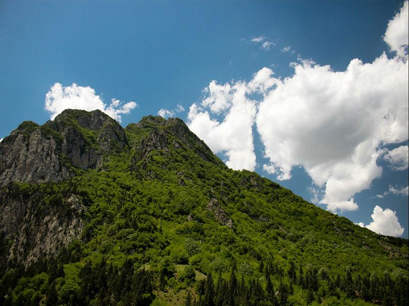 آشنایی با جنگل های هیرکانی دومین میراث طبیعی به ثبت رسیده در سازمان جهانی یونسکو
