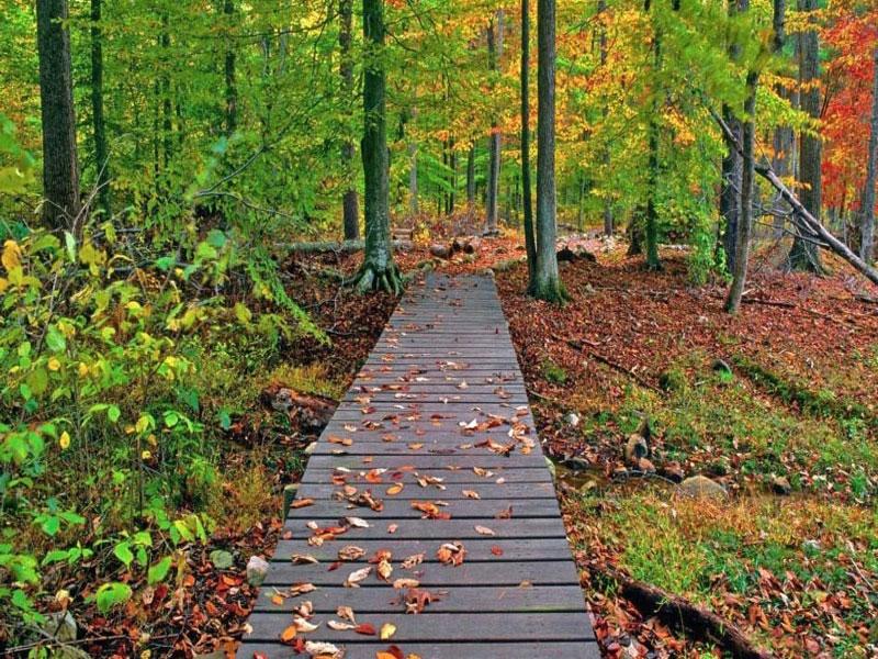 معرفی جنگل گیسوم