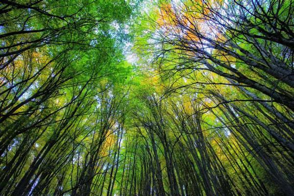 دلیل اهمیت جنگل های هیرکانی چیست؟
