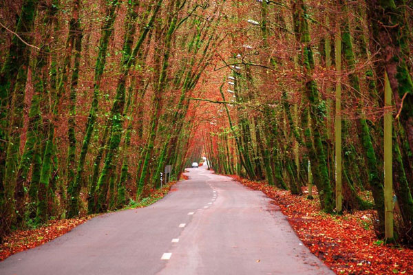 زمان مناسب برای بازدید از جنگل گیسوم چه فصلی است
