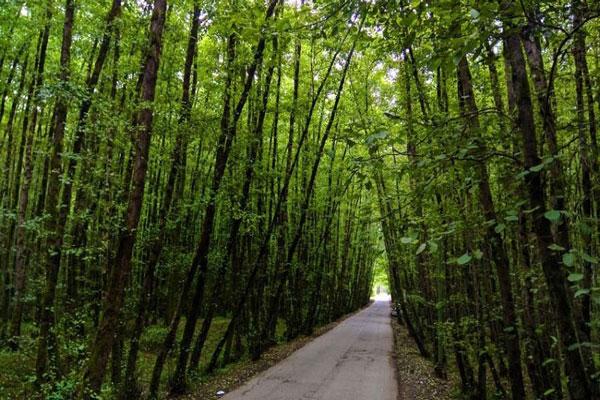 محل جنگل گیسوم در استان گیلان