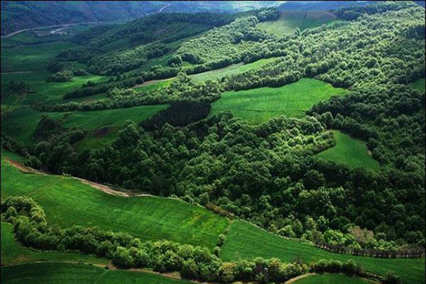 آشنایی با مشخصات جنگل های هیرکانی