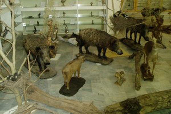موزه ی جانور شناسی در رشت