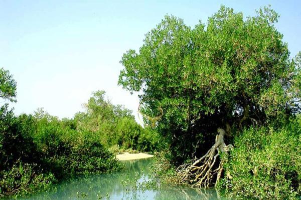 موقعیت-مکانی-جنگل-های-مانگرو قشم