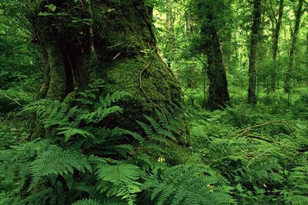 جنگل های هیرکانی ثبت شده در میراث جهانی یونسکو