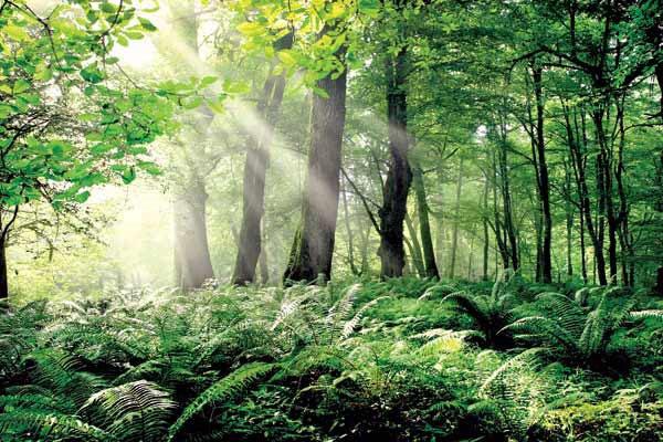 معرفی هتل های اطراف جنگل های هیرکانی