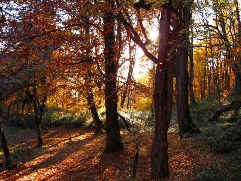 جنگل رویایی الیمستان