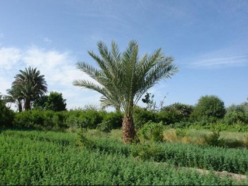 روستای لادیز نگینی سبز در مجاورت تفتان
