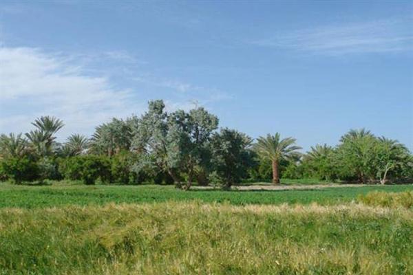 طبیعت-روستا-لادیز زاهدان